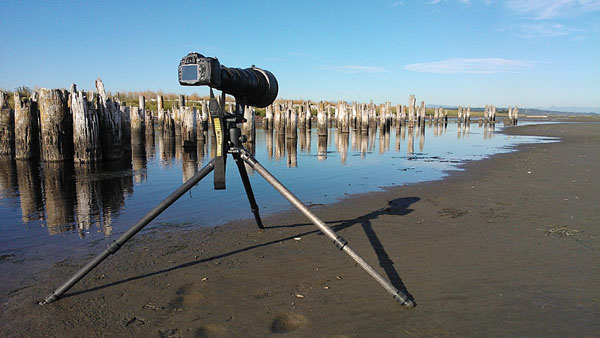 The Ruins, pilings of old cannery at Boundary Bay.