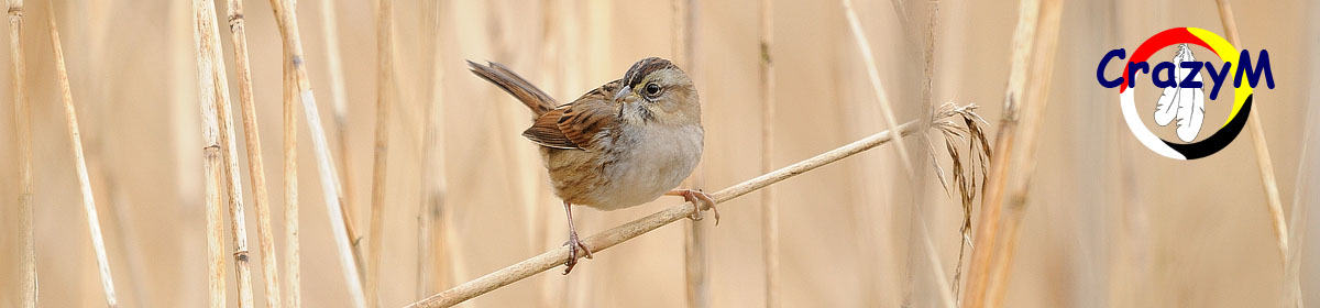 CrazyM Bird & Nature Photography